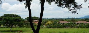 Plantation de cacao de San Fernando - Yves Thuriès