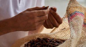 Franchise Yves Thuriès : La métamorphose de la fève en cacao !