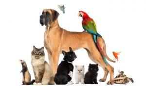 Le marché de l'alimentation animale est en mutation