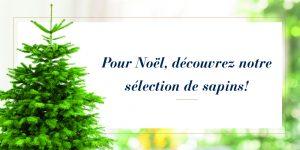 Sélection de sapins de Noël - Monceau Fleurs
