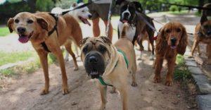 promenade chiens canibest