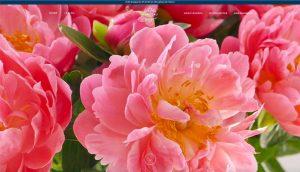 Nouveau site Monceau Fleurs - page d'accueil